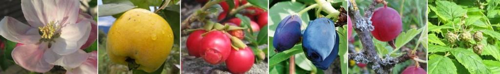 Header Obst und Beeren